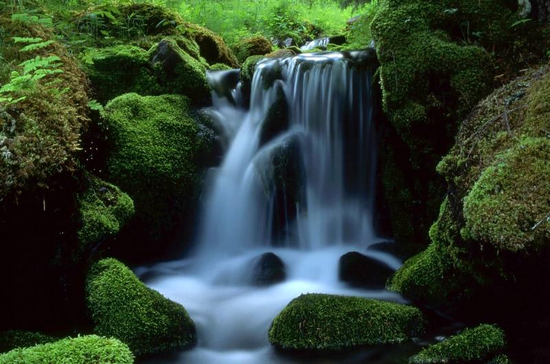 Natures Best
